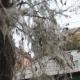 По факту растраты бюджетных средств на борьбу с горностаевой молью в Иркутске возбуждено уголовное дело